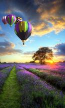 champs de lavendes