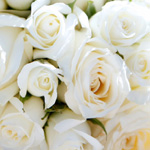 bouquet roses white